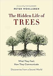 November 19: The Hidden Life of Trees (Wohlleben)